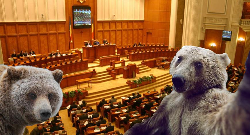 Parlamentul României, invadat de urși din cauza gunoaielor care sunt înăuntru!