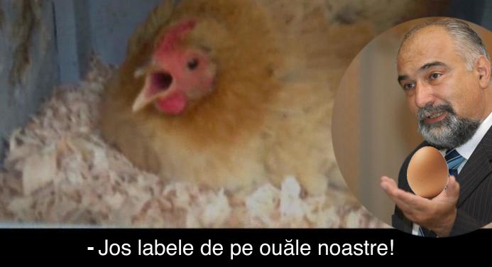 O găină mai deșteaptă decât orice politician îi răspunde lui Vosganian!